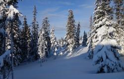 Schneelandschaft in Lillehammer